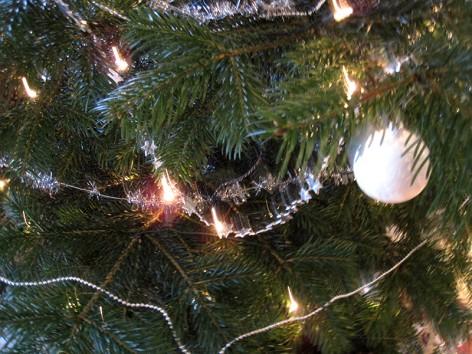 Weihnachtsbaum und erste Kameratests
