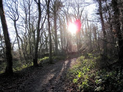 Durch den Wald im Siebengebirge …